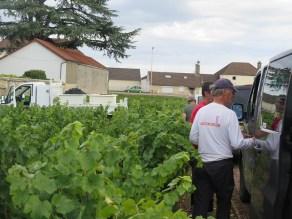 Vintage 2019 Burgundy Report
