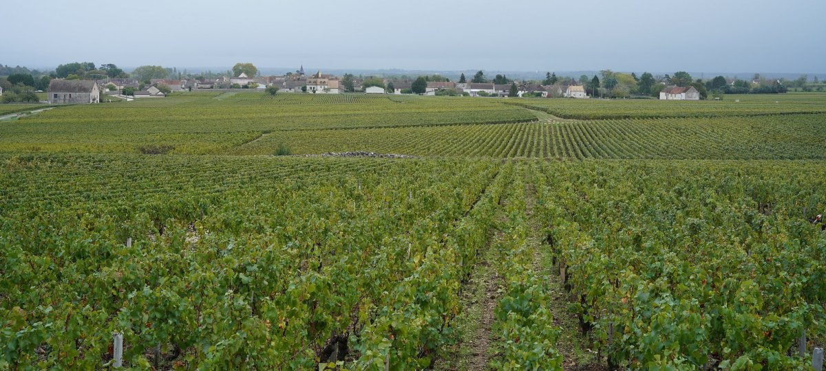 Puligny from Pucelles 06 Oct 2020