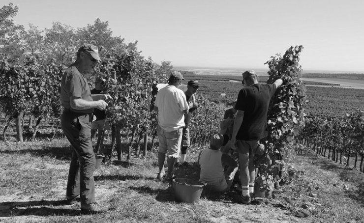 Patrick, Philippe, Jean-Claude et Gerard top of Noellat HCDN Pinot