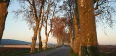 Route de Pommard