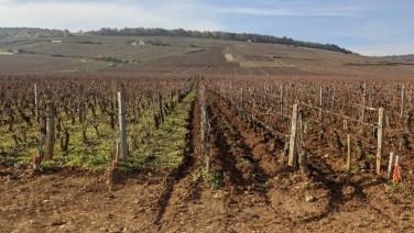 The rich, part-ploughed, soil of Romanée-Conti