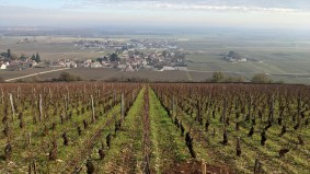 High up in Morey, looking down to the Clos de Tart