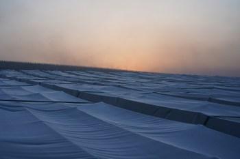Chablis Les Clos frost 'tents'