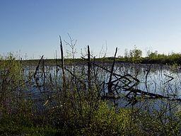 Ellice Swamp, Perth County Ontario
