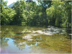 It is wetlands like these that the PERL people are trying to save as they oppose the granting of an additional license for quarrying to Nelson Aggregates.