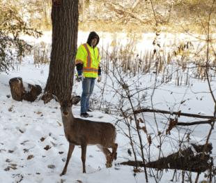 Deer 2 bigger