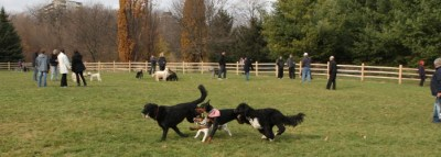 dogs-off-leash-opening
