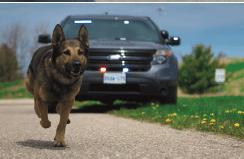 police dog running