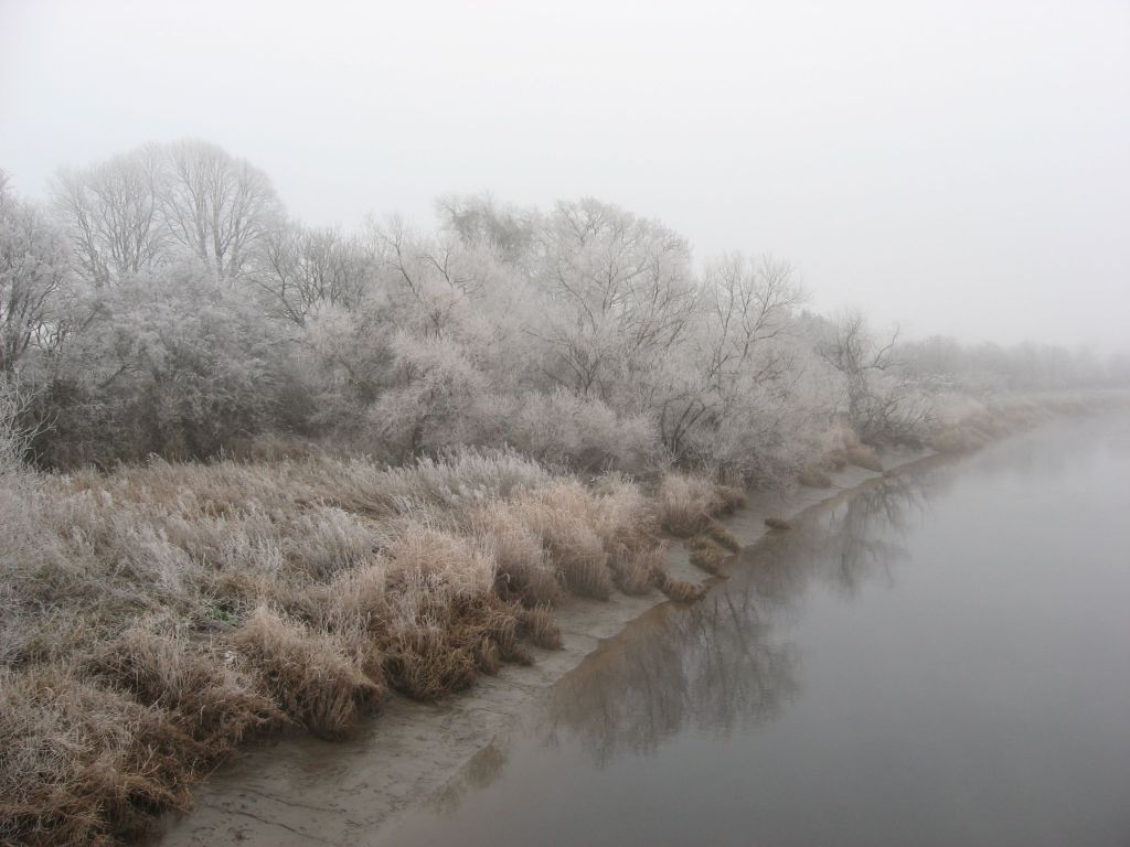 Riverbank, misty, with a lot of frosty trees and rushes