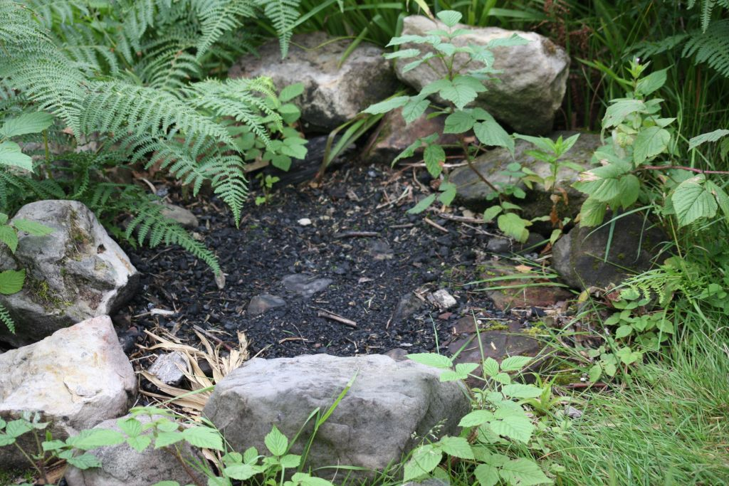 fireplace at Tappoch broch, ashes overgrown with fern and bramble