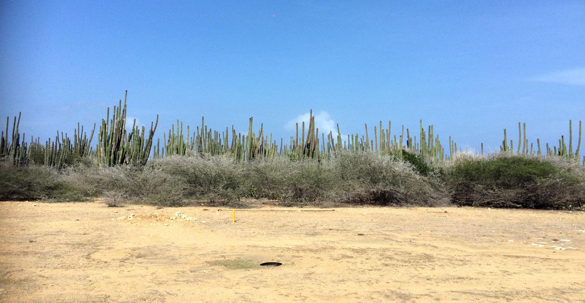 Gritty Aruba
