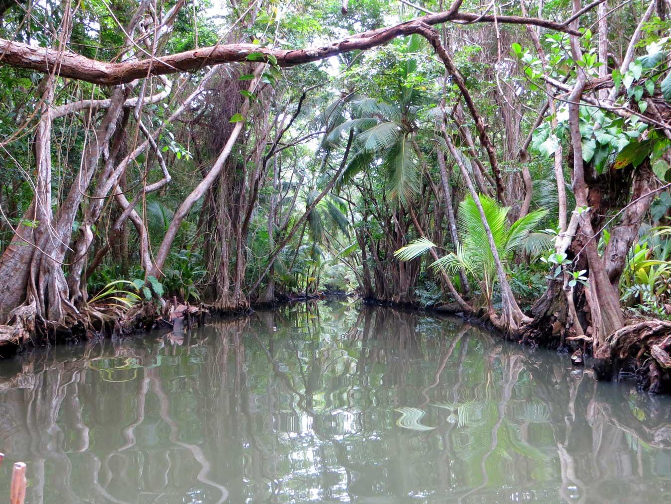 A beautiful tributary