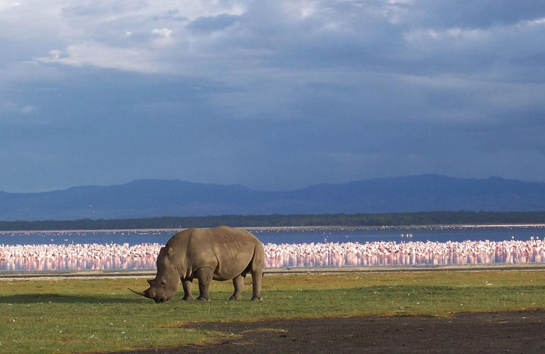 Nashorn Afrika Safari Tansania Planung