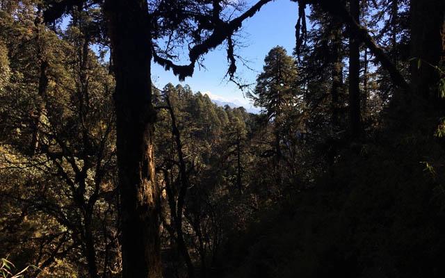 Poon Hill Trekking Rhododendron Wälder Nepal