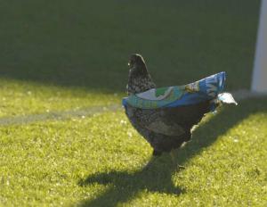 Foto: BurnleyFC.com