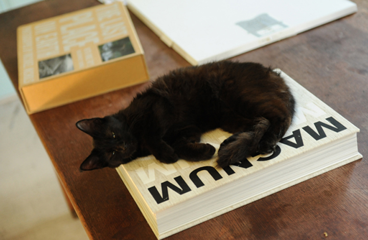 91bdd3b23d stray cat…. « burn magazine