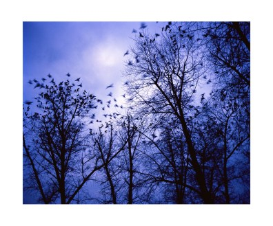 The evening crows descend on the city of Rybnitsa.