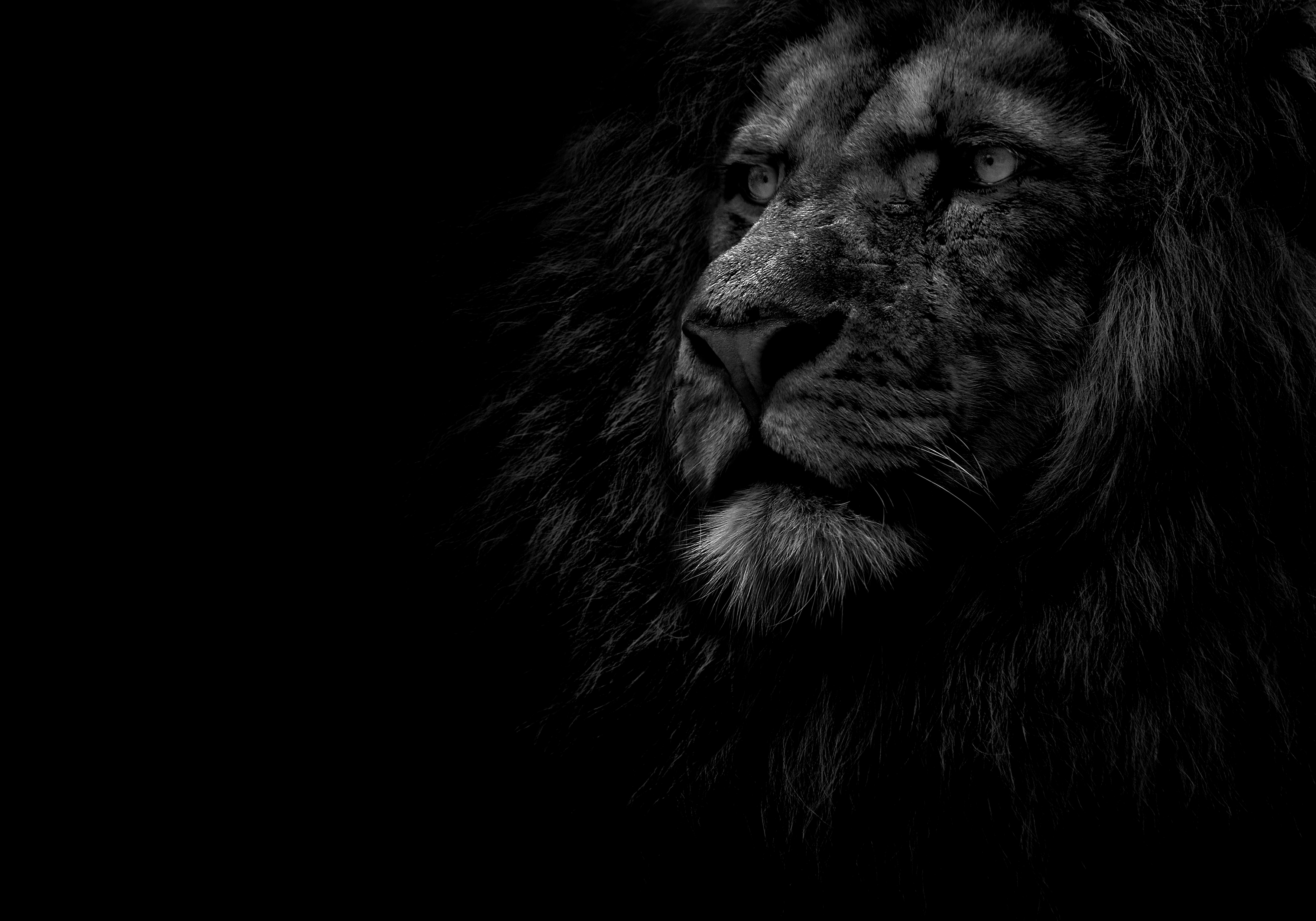 The Goal Of The Lion Inside The Lion Inside