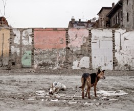 Dogs in the poorest district of Budapest.