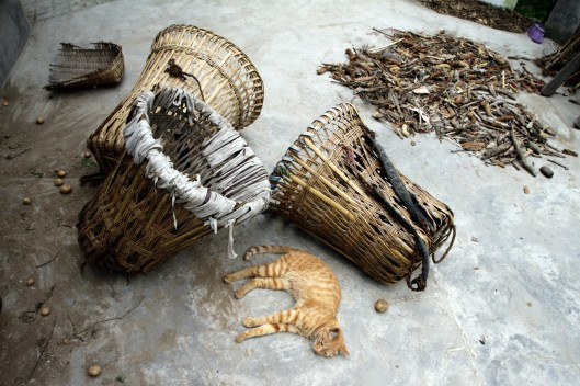 Traditional Chinese medicine is collected from the forests by locals, often unregulated and unchecked. Unsustainable harvesting is still a problem throughout Sichuan as demand for the medicine increases each year.