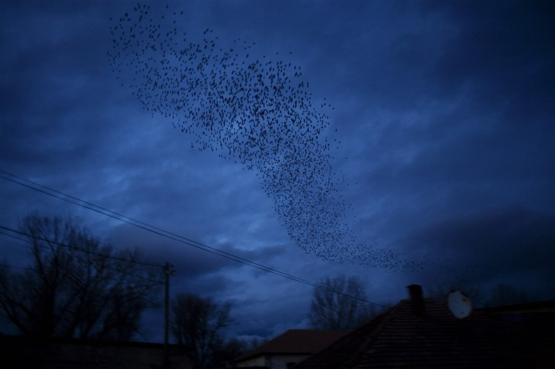 The famous black birds of Kosovo in flight over the divided city of Mitrovica.