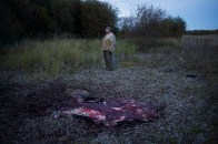 """Big Ray"" stands over the remains of a hunted moose in the Athabasca Delta."