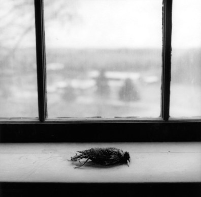 24__Rested__triptych_center_panel_Starling_on_sill_St.Meinrad_Indiana_2005