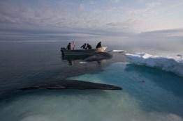 After Iceberg 9 Crew helped bury Benjamin Ahmaogak Sr, captain of Iceberg 14, they returned to the Chukchi Sea and harpooned this bowhead. Ben's grandchildren helped them land it. Wainwright, Alaska - Olgoonik.
