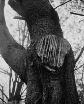 Cut Tree, Charlottesville, Virginia