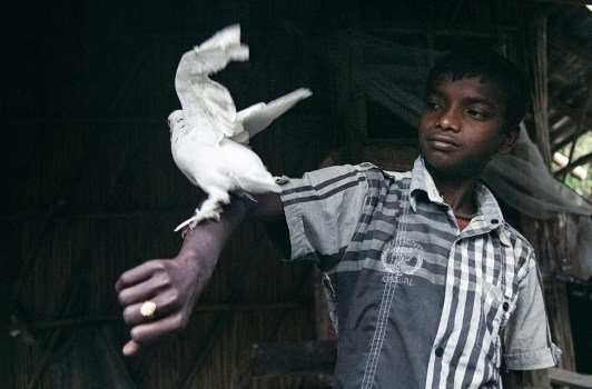 A boy with his pegion at a village naer the international border of West Bengal state in India and Bangladesh.
