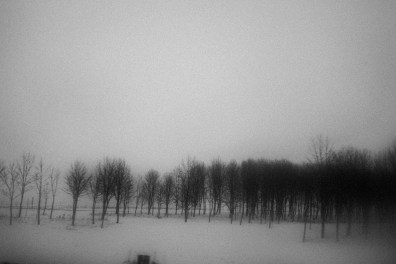 Trees on the road near Kupiskis. 26th of January 2016, near Kupiskis, Lithuania.