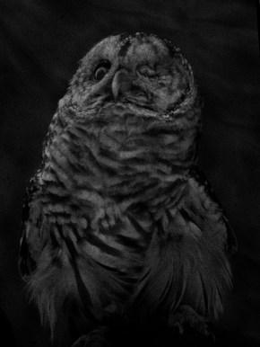 14 - Owl - 489de2a6-9685-402b-b678-15035f464b7b