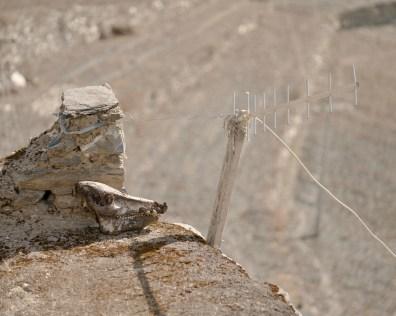 15 - Wild boar skull and antenna - 2f88a4d4-e2e8-4d51-8243-8dd1744188fc