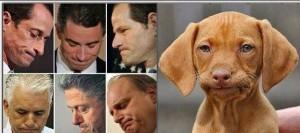 scandaldog