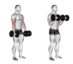 Resultado de imagen de curl biceps