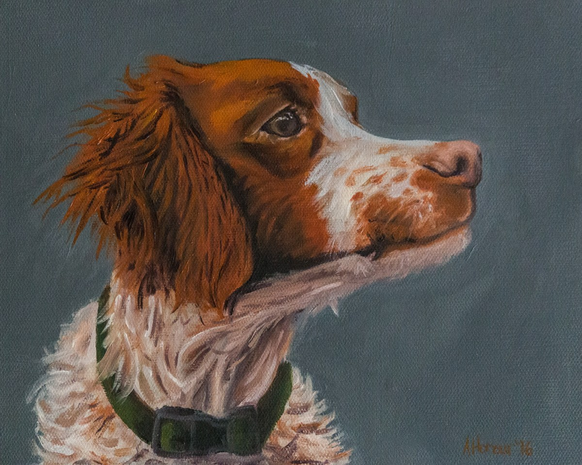 "8x10 oil on canvas by Amber Honour ""Brittany Spaniel Dog Portrait"""
