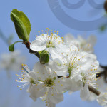 fotografie natuur lente
