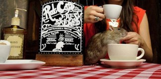 """""""Ratuccinos"""" set to be Canada and Vancouver's first rat cafe  Vancouver rat cafe opens soon"""