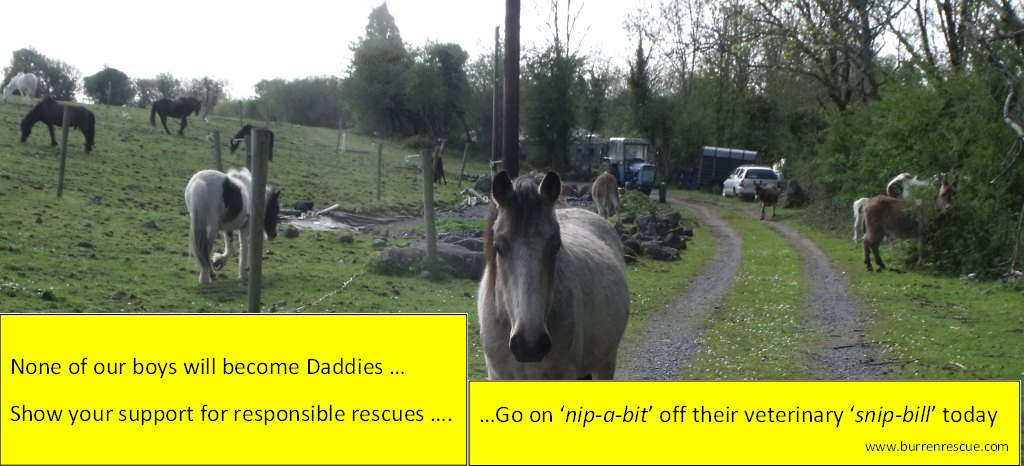 Support Responsible Rescues