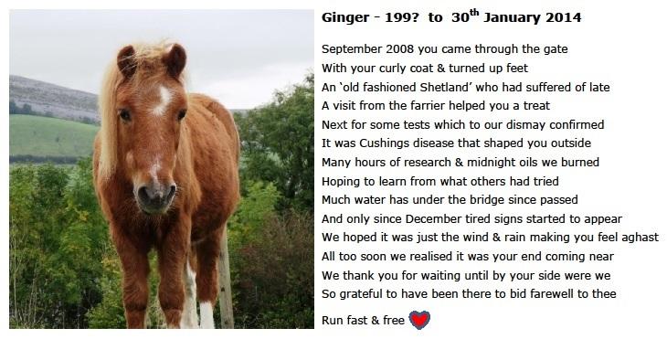 rip ginger 30-1-14