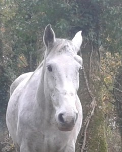 Ghost is a gelding who is approx 17h