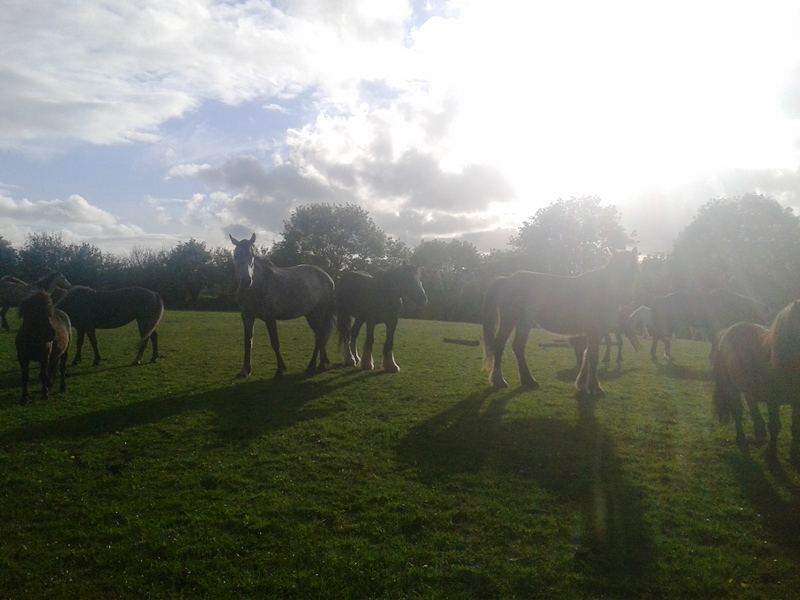 rescue horses at Burren Animal Rescue