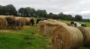 Killura Agri Hay Delivery 4-9-15