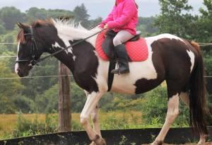 Gypsy being ridden