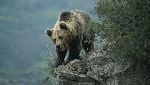 Que ver en Asturias. Safari por España