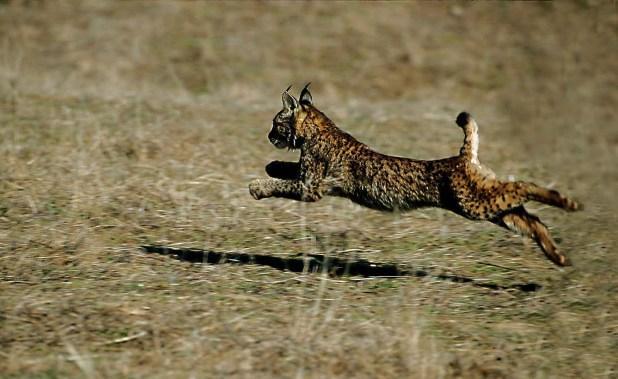 sierra de Andújar. safari por España