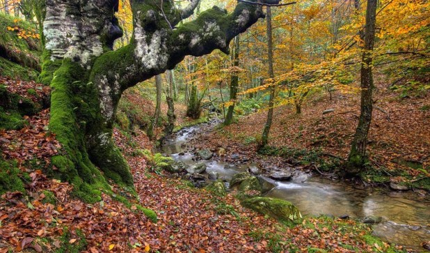 ruta de senderismo al hayedo de Urkiola en otoño