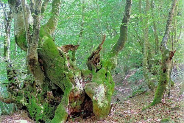 ruta al bosque encantado de Carlac