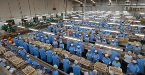 Papua New Guinea's fisheries boom