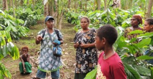 Opinion: Give Papua New Guinea agriculture the break it needs